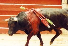 toro-arena-matador